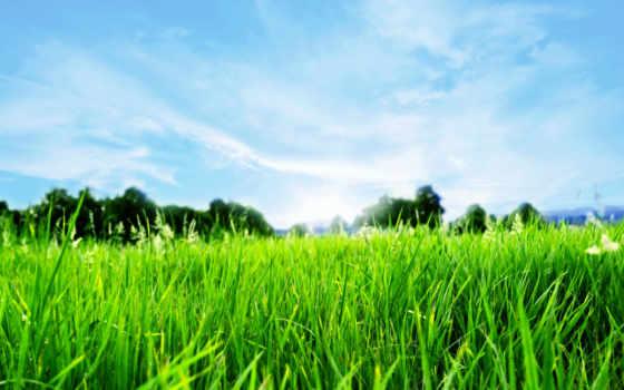 трава, весна, горизонт