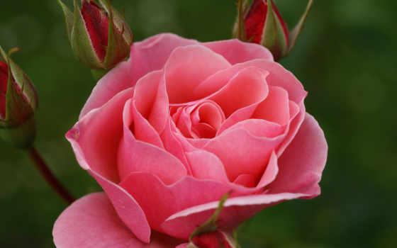 счастья, любви, желаю, здоровья, рождения, love, стих, тебе, thank,