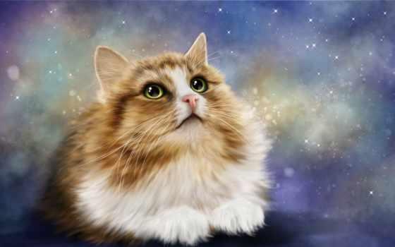 кошка, кот, animal, cats, свет, kot, взгляд, купить, котэ,