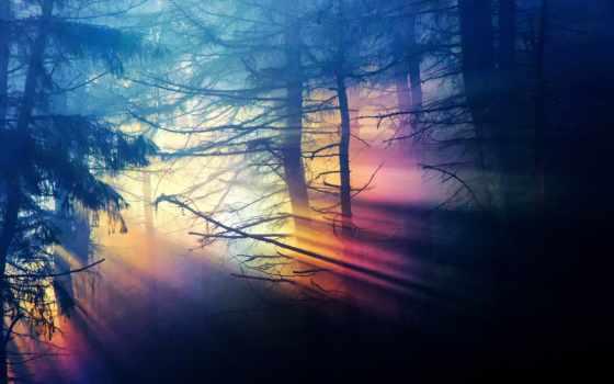 природа, darkness, свет, лес, дремучий, спектр, радуга, ветки, trees,