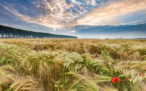 crop,