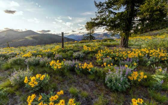 природа, landscape, дерево, summer, поле, гора, fore, небо, лед, цветы, natural