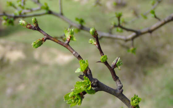 весна, ветви