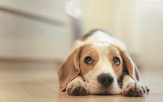 грустный пес на полу