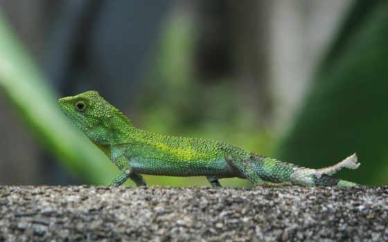 высоким, качеством, ящериц, видами, infoserver, красочные, oboi, разными,