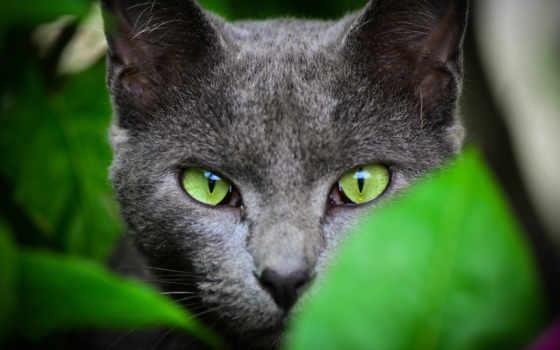 свет, кот, зеленые, глазами, кошки, зелёными,