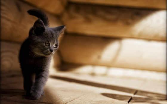 котенок, кот, грустный