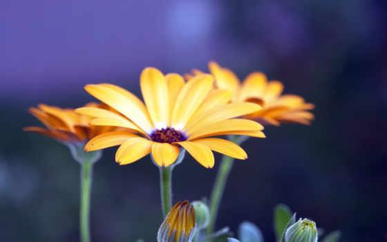 цветы, макро, красавица