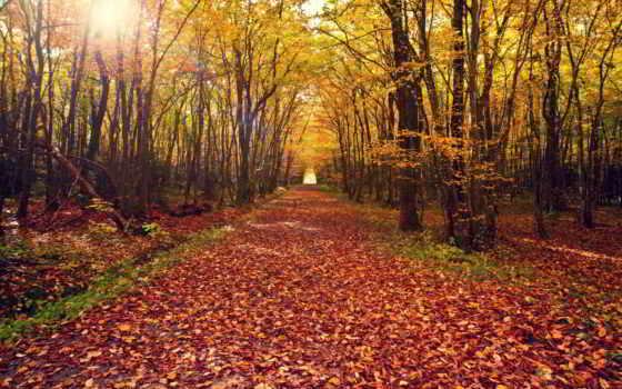 camino, hojas, otoño, bosque, naturaleza, rboles, paisajes, fondos, del, gratis, pantalla,