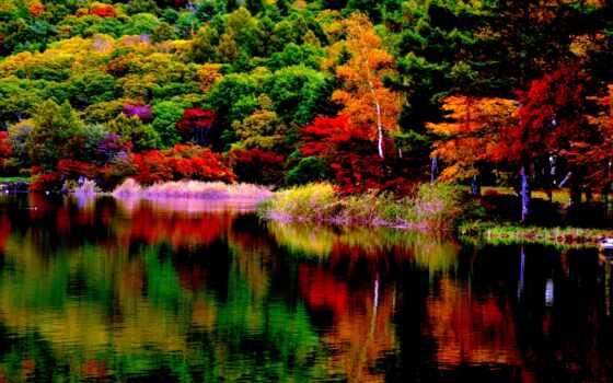 сказочный, пасть, октябрь, жизни, поет, лес, случаи, ideas, iphone,
