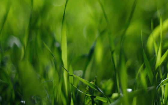 поле, стебельки, макро, трава, зелёный, grass, wallpaper, nature, природа,