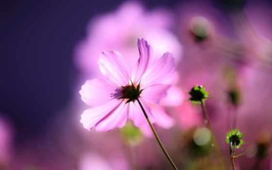 макро, цветок Фон № 37331 разрешение 1920x1200