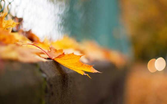 осень, макро, боке