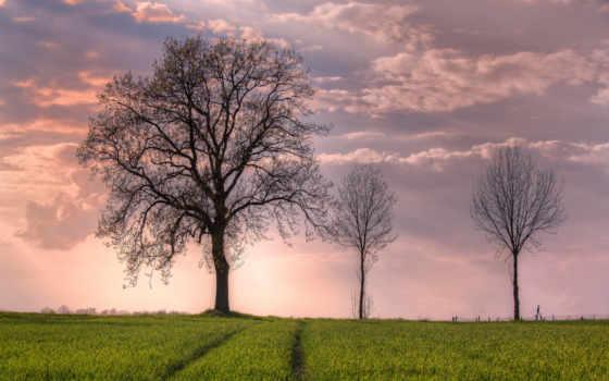 открыть, поле, дерево