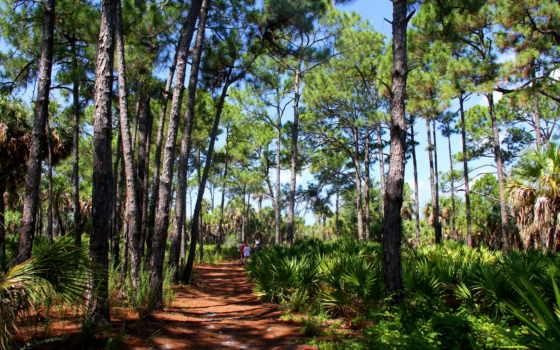 лес, equatorial, priroda