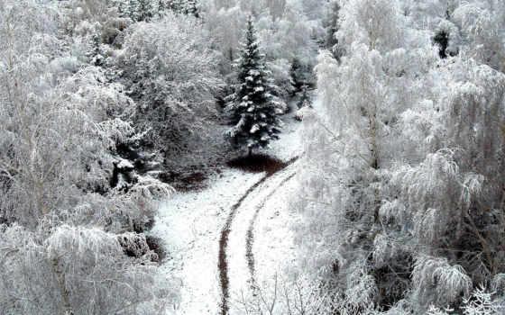 лес, снег, свой