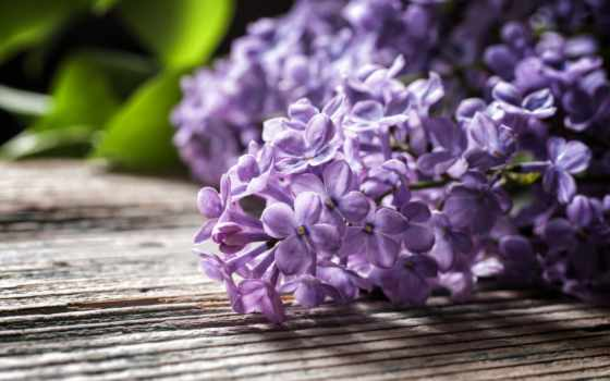 цветы, сиреневый, коллекция