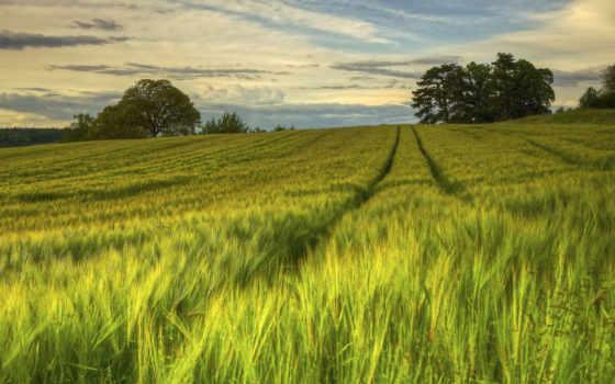 природа, sweden, вечер, summer, поле, margin,
