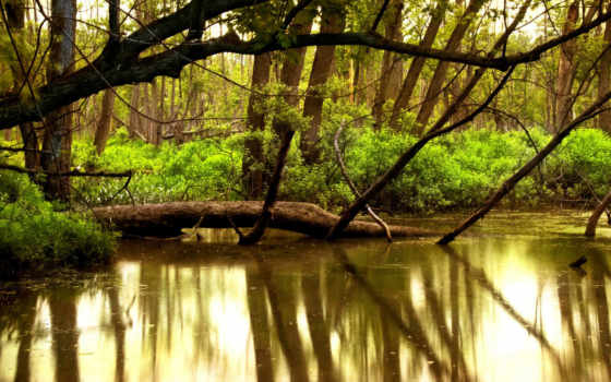 озеро, лесное, старое, качаем, лес, поле, природа, цветов, отдыха,