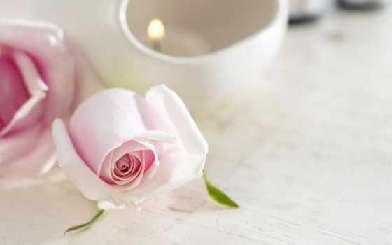цветы, нежность, ipad, роза, розы, розовые, свеча, широкоформатные,