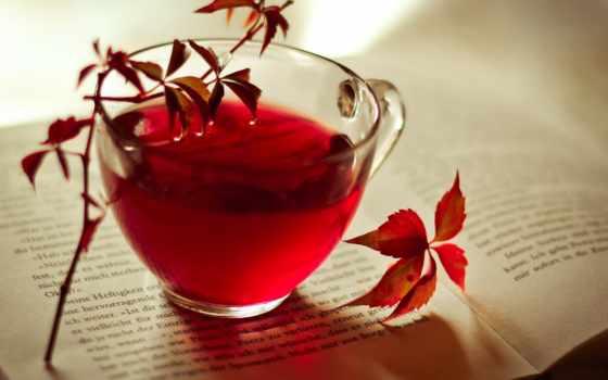 чая, книга, cup, листва, осень, бордовые, красные, настроения, купить, напиток, кемерово,