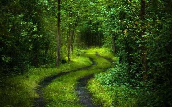 дорога, лес Фон № 32275 разрешение 1920x1080