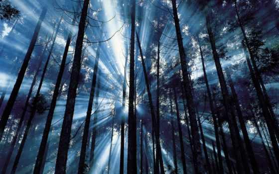 разных, лучи, пробиваются, солнечные, разрешениях, лес, яркие, густой,