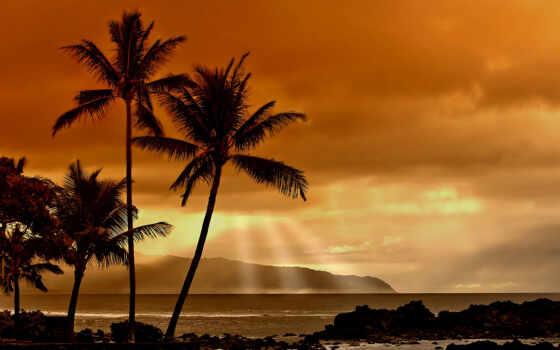 закат, пальмы, море