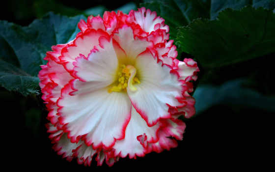 различную, тематику, розовый, цветы, позитивом, фотографий, зарядимся, красивых, сегодня,