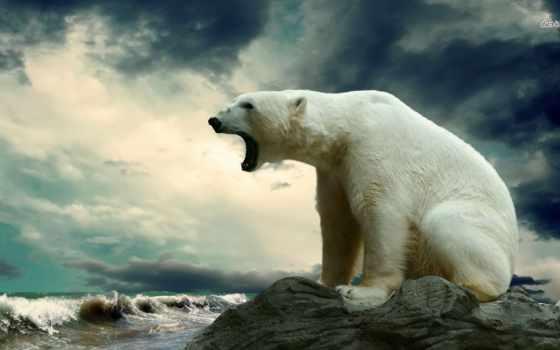 медведь, white, polar, сидит, медведи, красивый, смотрит, камне, море,