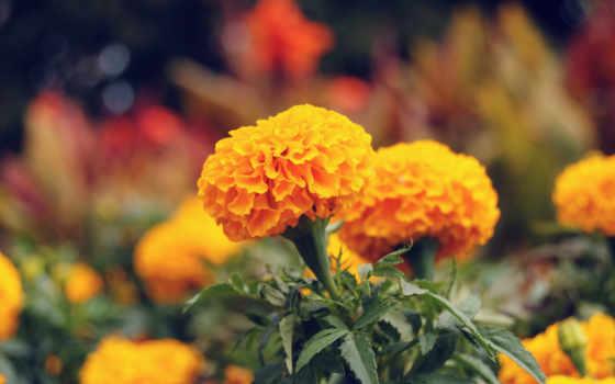 flowers, high, definition, природа, цветы, wide, widescreen, petals, роза,