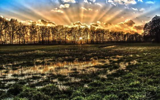 поляна, stock, утреннего, солнца, photos, лучах, trees, wet, разрешениях,