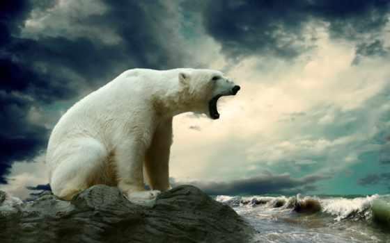антарктиде, невероятных, по