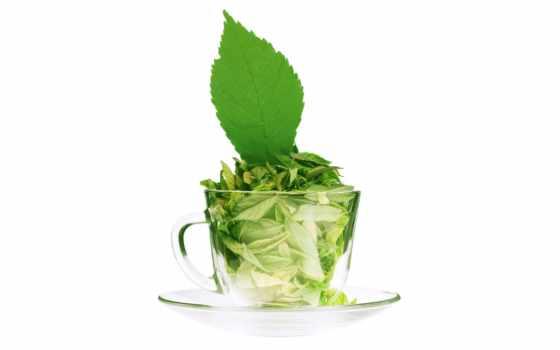 чая, coffee, чая, магазин, листья, stevia, online, интернет, png, market, time,