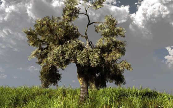 дерево, холм