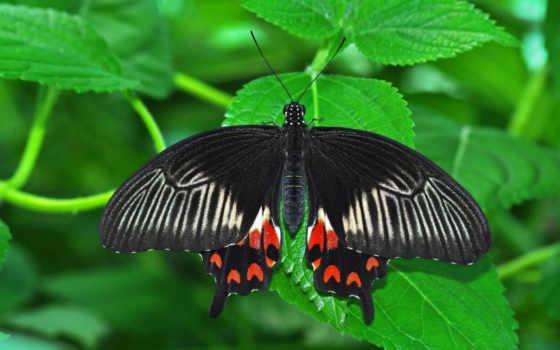 бабочка, насекомое Фон № 23880 разрешение 2560x1600