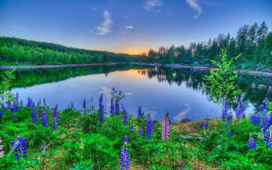природа, цветы, озеро