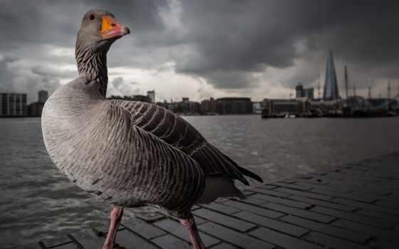 photography, awards, животные, british, победители, фото,