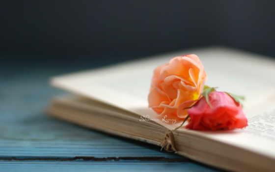 страницы, книга, роза, оранжевый, красный