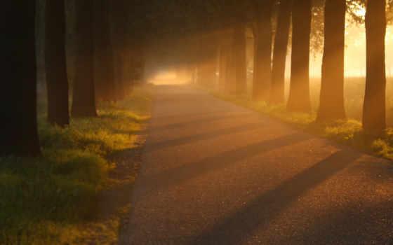 закат, trees, тропинка, trail, sunlight, дорога, трава, лес,