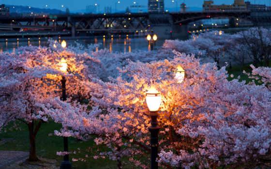 весна, город, вечер, огни, ночь, фонари, мосты, река, park,