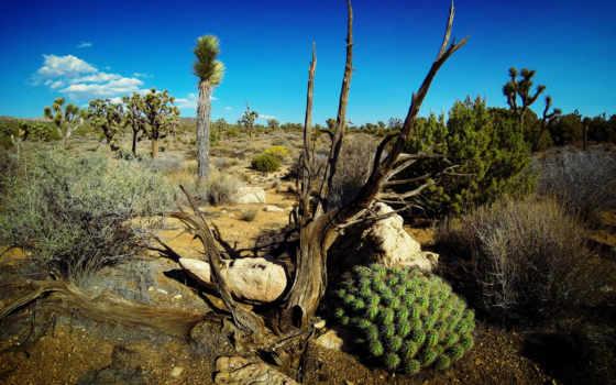 photos, навин, flickr, desktop, california, дерево,