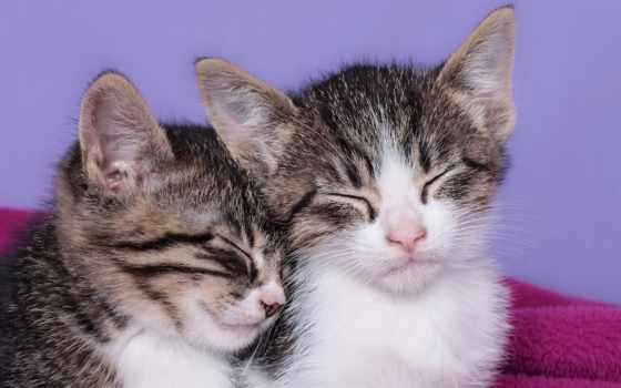 котята, малыши, спать, спящие, картинка,