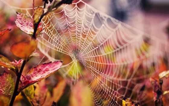 осень, макро, листва, природа, картинка, branch, капли, web, water,