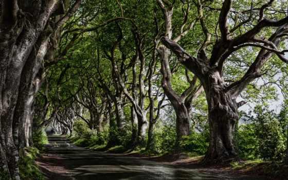 дерево, найти, studio, tens, thousands, сквозь,
