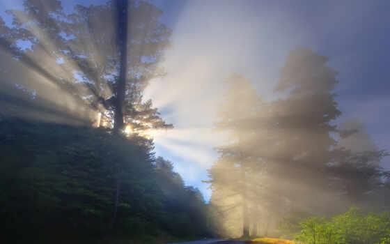 природа, туман, лес, дорогой, магазин, drawing, landscape, cl-nica, del