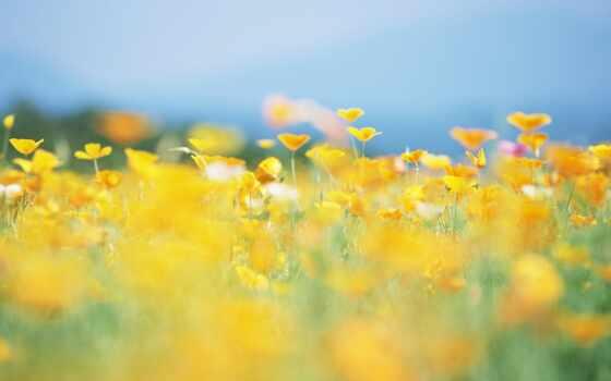 цветы, солнечный