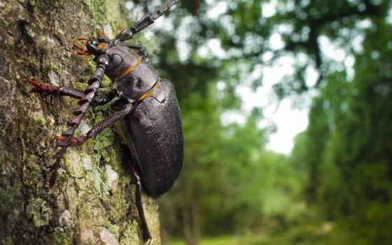 дерево, кора, ствол, жук, макро, усатый,