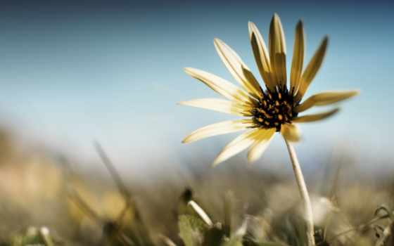 life, тяжёлая, предыдущая, will, цветка, страница, следующая,