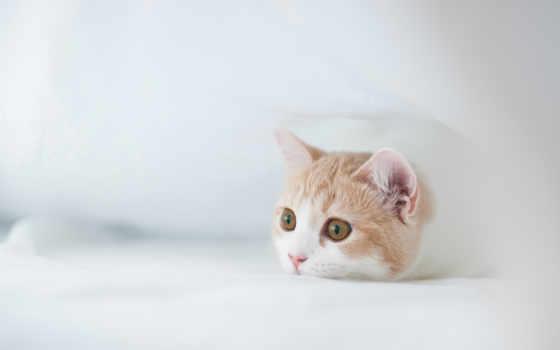 котенок, white, torode